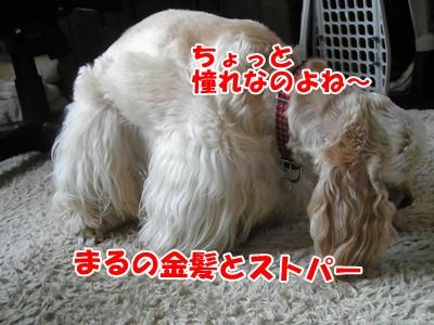 003_20110613211909.jpg