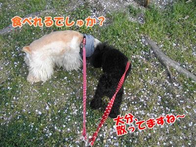 004_20110410211939.jpg