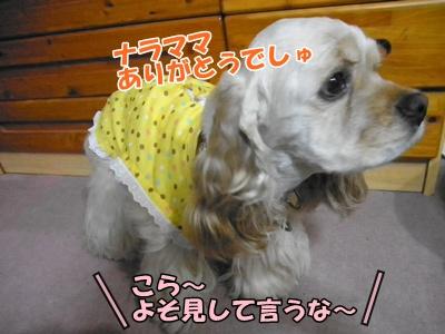 004_20110720223451.jpg