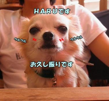 004_20110724204322.jpg