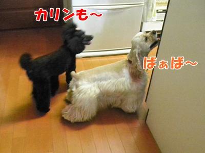 004_20110920212816.jpg