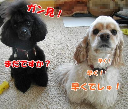 006_20110526215927.jpg