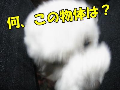 007_20110430204332.jpg