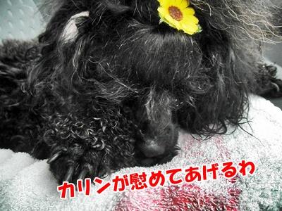 008_20110607212734.jpg