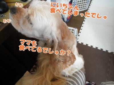 008_20110816171752.jpg