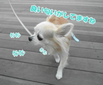 009_20110523221312.jpg