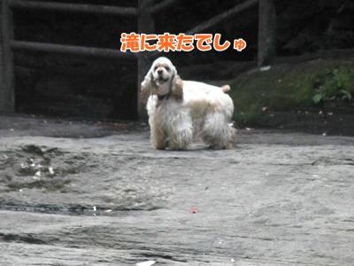 009_20110816181240.jpg