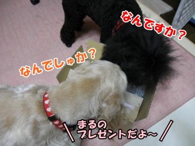 010_20110326110329.jpg