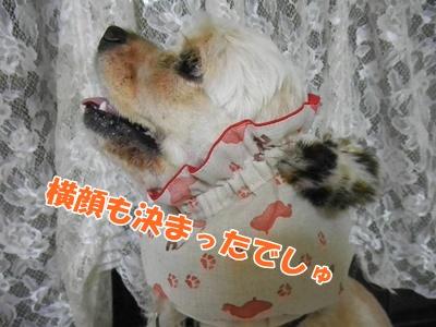 010_20110823221836.jpg