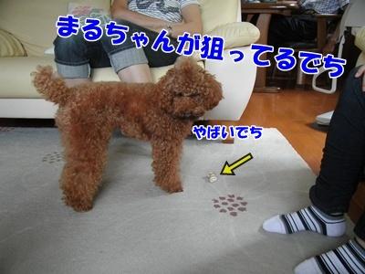 010_20110920212815.jpg