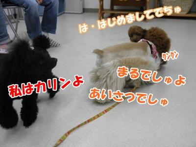 011_20110505175441.jpg