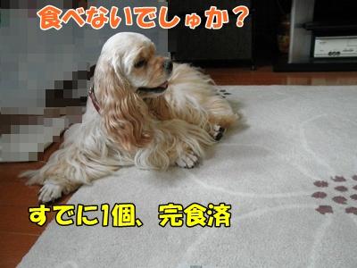 011_20110920212814.jpg