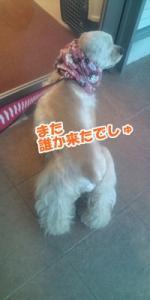 012_20110502215555.jpg