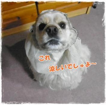 015_20110719223638.jpg