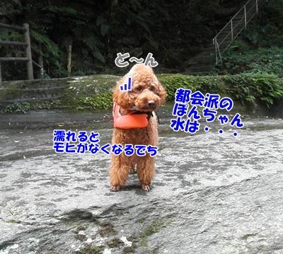 017_20110816181239.jpg
