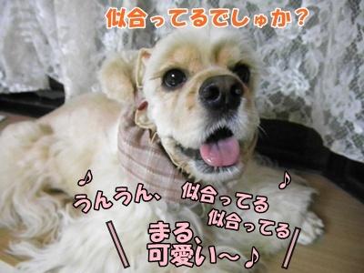 018_20110823221856.jpg