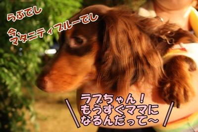 018_20110828185232.jpg