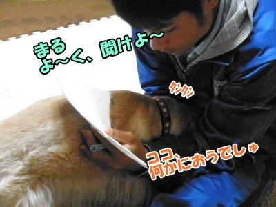 019_20110329214413.jpg