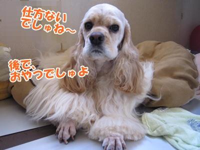 020_20110706215729.jpg