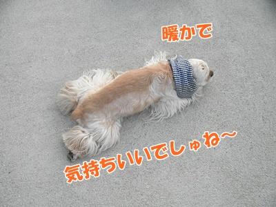 021_20110410212058.jpg