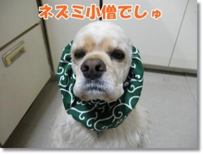 021_20110419205927.jpg
