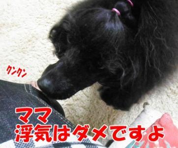 021_20110430204505.jpg