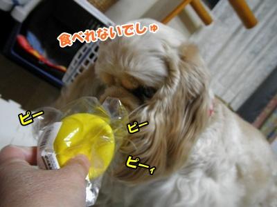 022_20110326125144.jpg