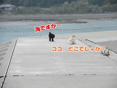 022_20110416212038.jpg