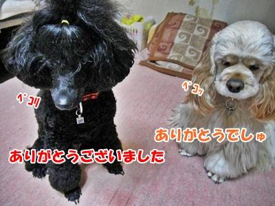 024_20110326110443.jpg