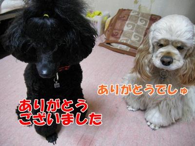 024_20110409210721.jpg