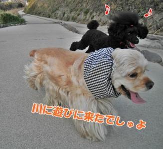 024_20110410212058.jpg