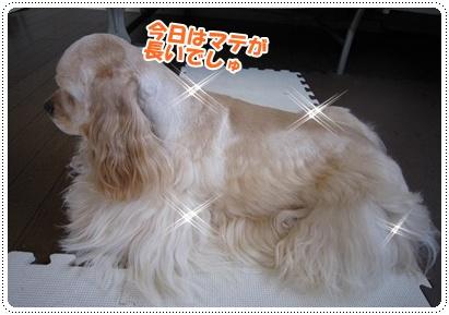 024_20110706212259.jpg
