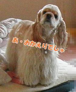 026_20110327114552.jpg