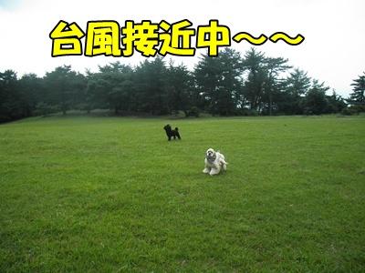 026_20110626192826.jpg