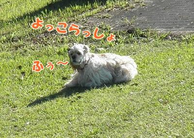 026_20110913230750.jpg