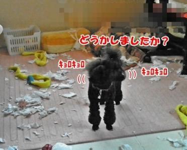 027_20110326110443.jpg