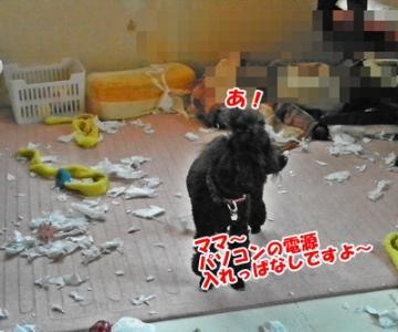 028_20110326110456.jpg
