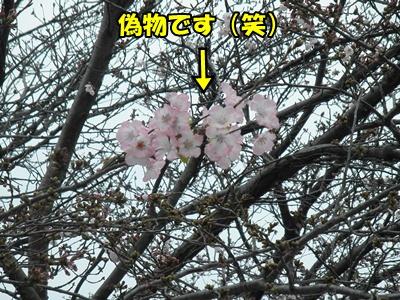 028_20110404204854.jpg