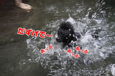 028_20110730174539.jpg
