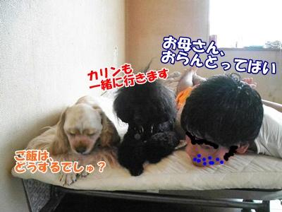 028_20110811180303.jpg