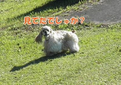 028_20110913230749.jpg