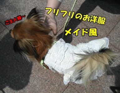 035_20110411215732.jpg
