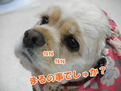 036_20110505202140.jpg
