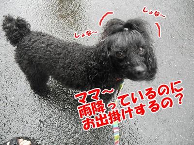 036_20110620140327.jpg