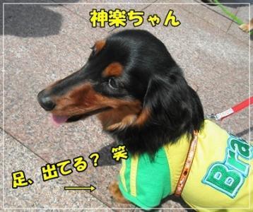 037_20110411221559.jpg