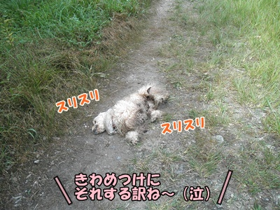 037_20110807145944.jpg
