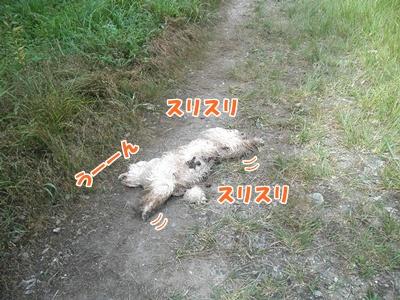 038_20110807145944.jpg