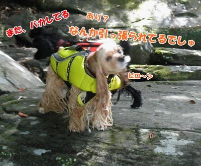 039_20110816181458.jpg