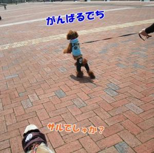 041_20110411215934.jpg