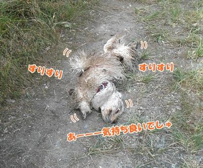 041_20110807150028.jpg